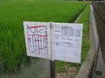 特栽米、エコ農産物の案内看板