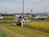 コシヒカリ刈り取り 収穫中盤