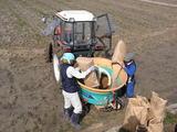ボカシ肥料を撒いています。(^o^)