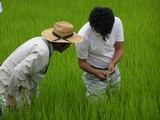 稲の生育は順調です(^o^)