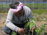 忙中閑あり トマトの定植