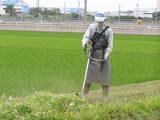 草刈り23.6.16-1.JPG